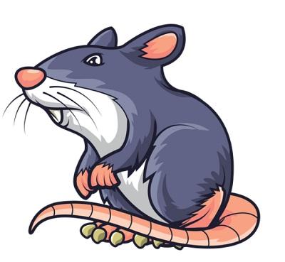 איך להרחיק עכברים